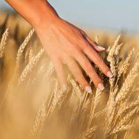 Barley today smaler